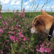 Hondenbezitters hebben een nieuw argument tegen katten: biodiversiteit!