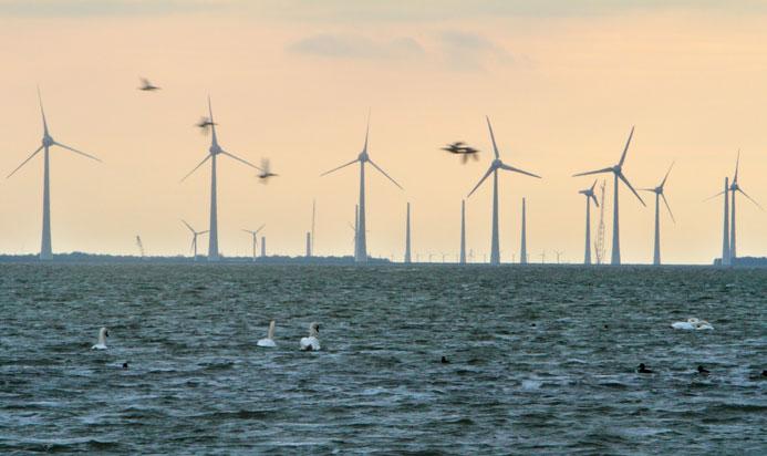 Vogelrustgebied: watervogels als zwanen en eenden mijden windfarms tot 600 meter afstand