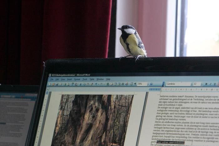 Druk aan het werk aan mijn boekske