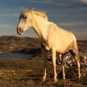 Plassend paard met Majdal e Shams op de achtergrond