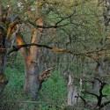 Bos is meer waardevol met natuurfunctie, dan in de gesubsidieerde kachel van een energieboer