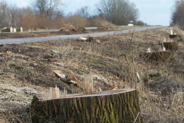 Biodiversiteitsbeleid: in de praktijk vernielt de geldzuchtige overheid de meeste bestaande natuur, zoals deze grootschalige arbocide door de Gemeente Friese Meren