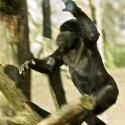 Een aap is intelligenter dan de gemiddelde journalist die over energie probeert te schrijven