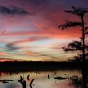Grootschalige verwoesting bossen Zuidoost Verenigde Staten door Europese biomassasubsidies