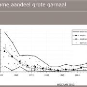 Presentatie Ingrid Tulp Imares van percentage +70 mm-garnaal