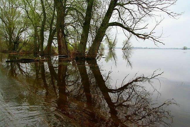 Wartha in Polen overstroomd...van Rijkswaterstaat moeten ooibossen gerooid voor de doorstroming