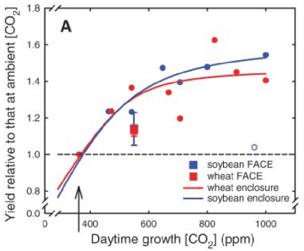 Veel hogere graanopbrengst door CO2-verrijking