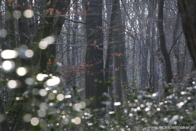 Dankzij olie, steenkool en gas bleven onze bossen gespaard