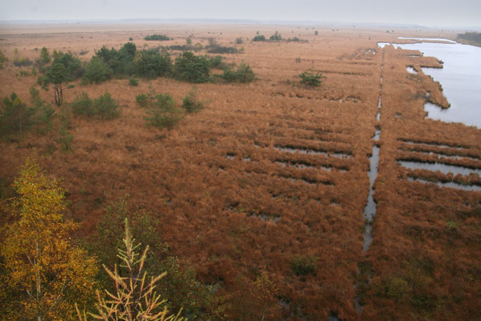 Het fochtelooer veen, de menselijke kavelpatronen zijn nog te zien