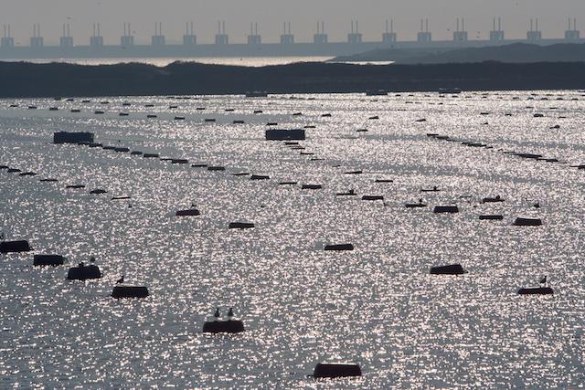 Met 7 miljard euro konden wij de Zeeuwen beschermen tegen de zee