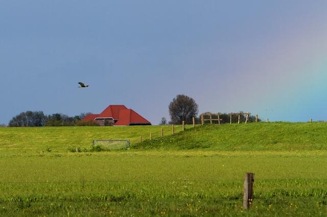 Bruine kiekendief boven Ettelandse Veld
