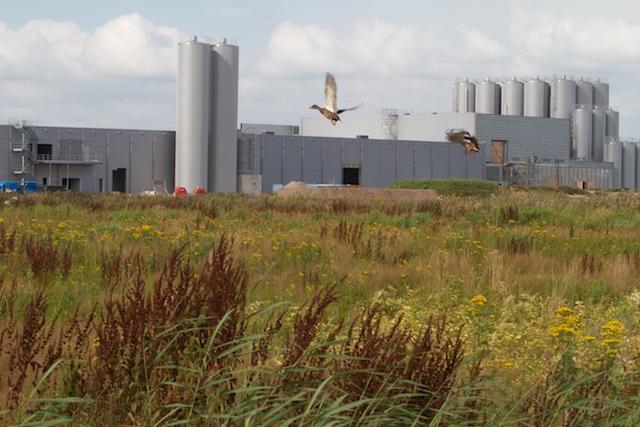 Dairy Valley aan de A32