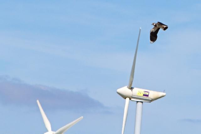 ...zowel de windmolenaar als de kievit-teler krijgen subsidie