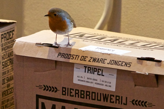 ..vogels, fantastisch adaptieve wezens die prima zonder Vogelbescherming Nederland kunnen.
