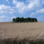 Zonder (subsidies voor) biofuels was het areaal benodigde landbouwgrond gedaald in de wereld