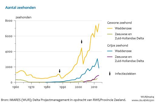 Zeehondenpopulatie blijft door dak groeien, nu mogelijk al 10.000 gewone en 3500 grijze