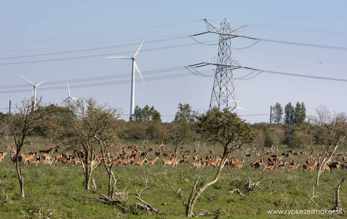 Serengeti Hollandaise: Nieuwe Natuur naast Almere