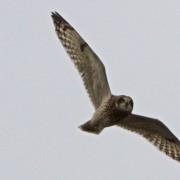 Velduil vloog voorbij en gaf mij een vogelaars-extase: de betere wereld. Vrijheid is het hoogste goed, geen onderdaan zijn van andermans voorwaarden