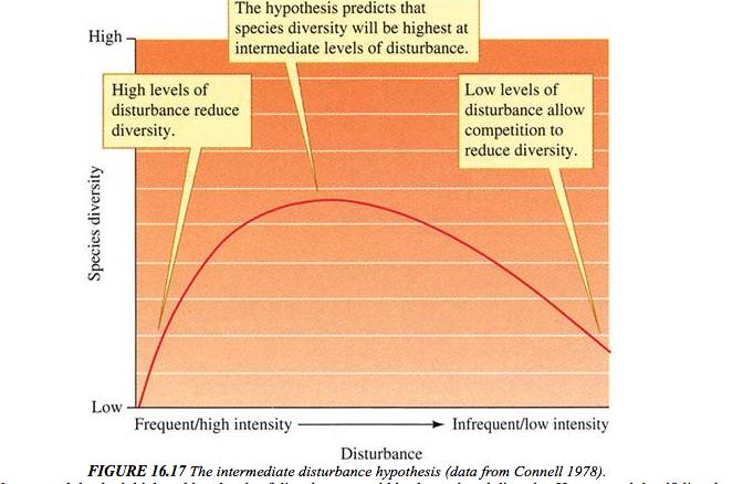 Basale ecologie geldt ook op het Wad, bij hoge verstoring (natuurlijk of niet, maakt geen verschil) minder soorten