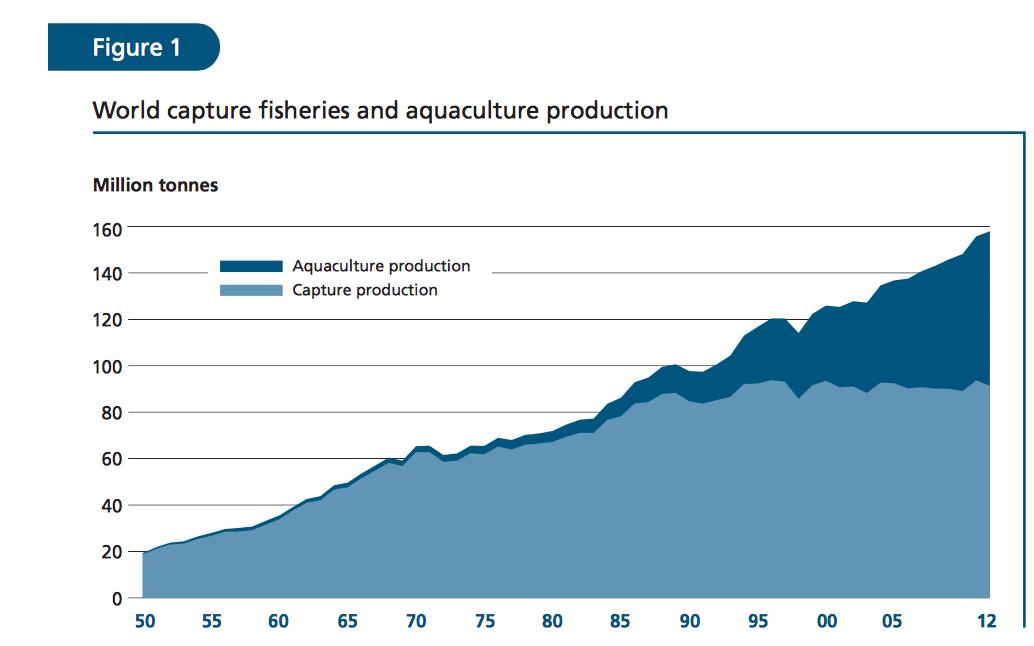 Mondiale visvangst en aquacultuur. Bron FAO2014  via http://www.fao.org/3/a-i3720e.pdf