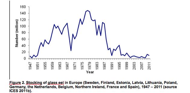 Vrijwel geen glasaal uitzet meer in Europa