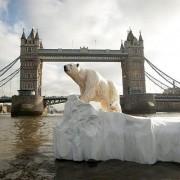 Polar bear Thames