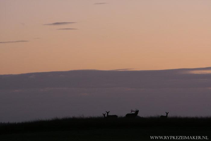 Nergens is wild zo goed zichtbaar als in het bejaagde Nationaal Park de Hoge Veluwe. Het beheer is daar ook deskundiger dan bij Staats Bos Bederf