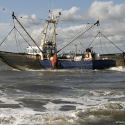 In een hoogdynamisch gebied met getijden speelt sleepnetvisserij een kleine ecologische rol