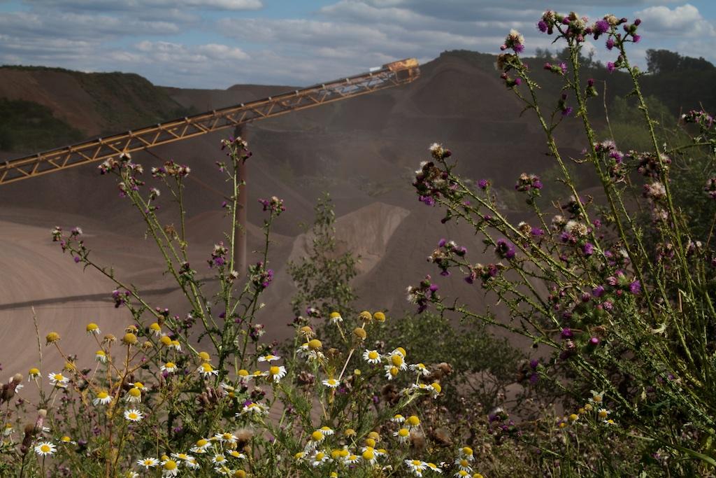 Plantengroei vult meteen de met rust gelaten gaten in van de lavagroeve