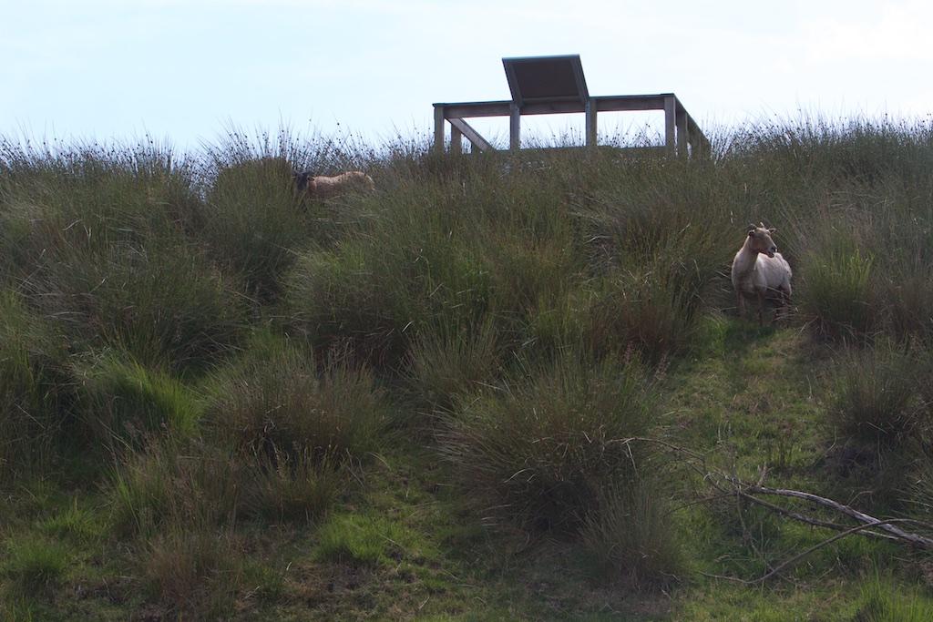De uitkijkheuvel met infobord: 1 geregistreerde bezoeker en een schaap