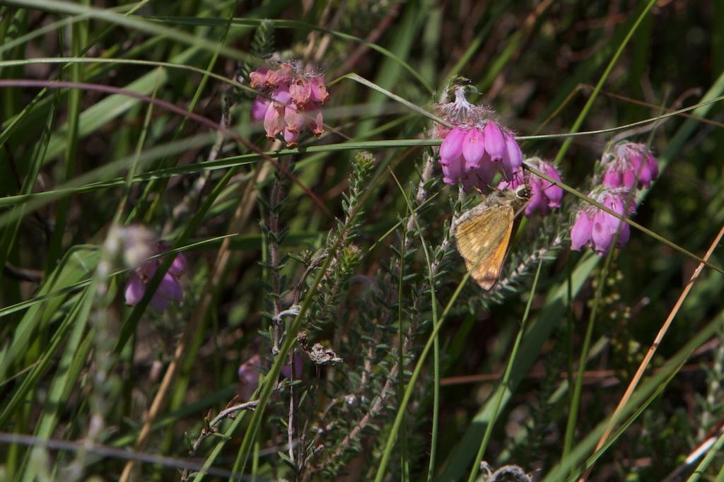 Unidentified Butterflying Object op dopheide