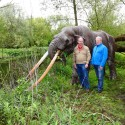 andré achtergrond soort olifant