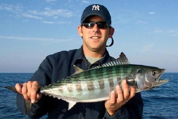 Bonito-Fish