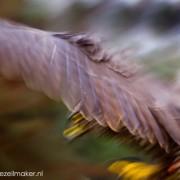 Vooral ROOFvogels doen het goed in laatste kwart 20ste eeuw. Ze beroven ons niet van onze bestaansbron