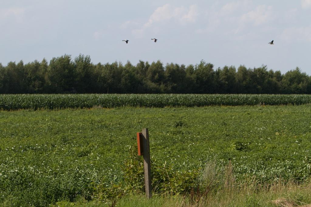 Typisch Holland: keiharde overgang natuurgebied en landbouw, het Bargerveen als eiland in landbouw-enclave