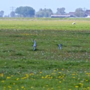 Dit kruidenrijke weidevogelland is volgens het PBL haar Mean Species Annihilator even soortenrijk als....