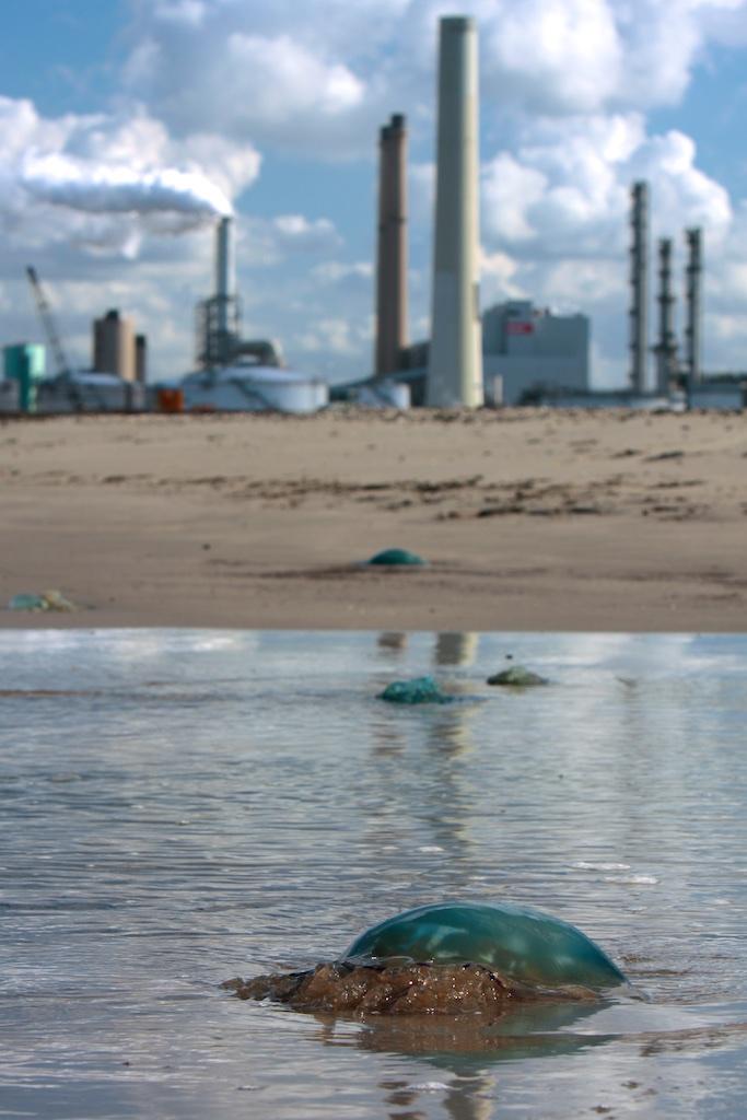 Woeste natuur op grensvlak zee en land, biosfeer en technosfeer
