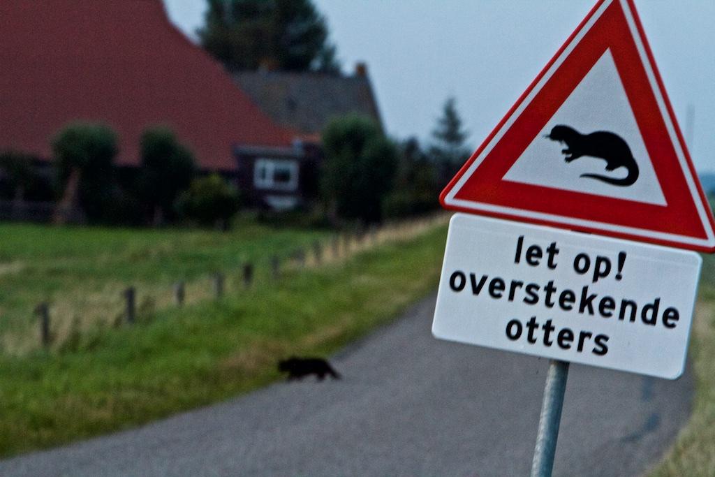 Er bevonden zich bij de Rode Lijst van 2005 al in het wild voortplantende otters in NL, maar toen heette hij nog 'verdwenen uit Nederland', nu heet hij 'ernstig bedreigd' terwijl hij overal stormachtig uitbreidt