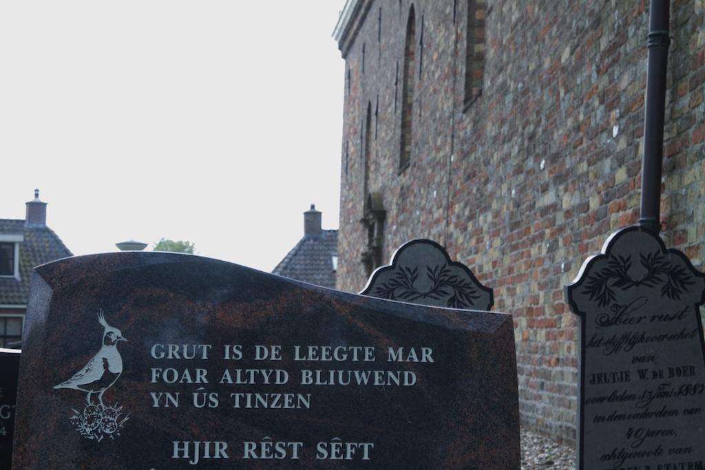 De kievit is deel van de Friese ziel, profiteerde van intensivering landbouw