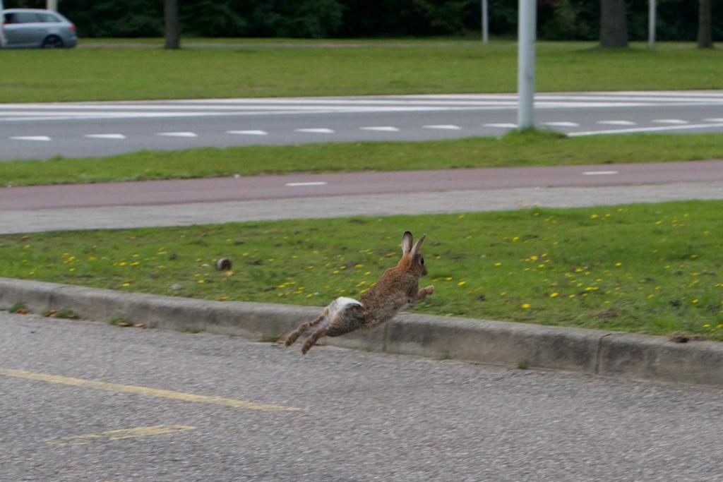 Een konijn a la Moutarde met jasje aan