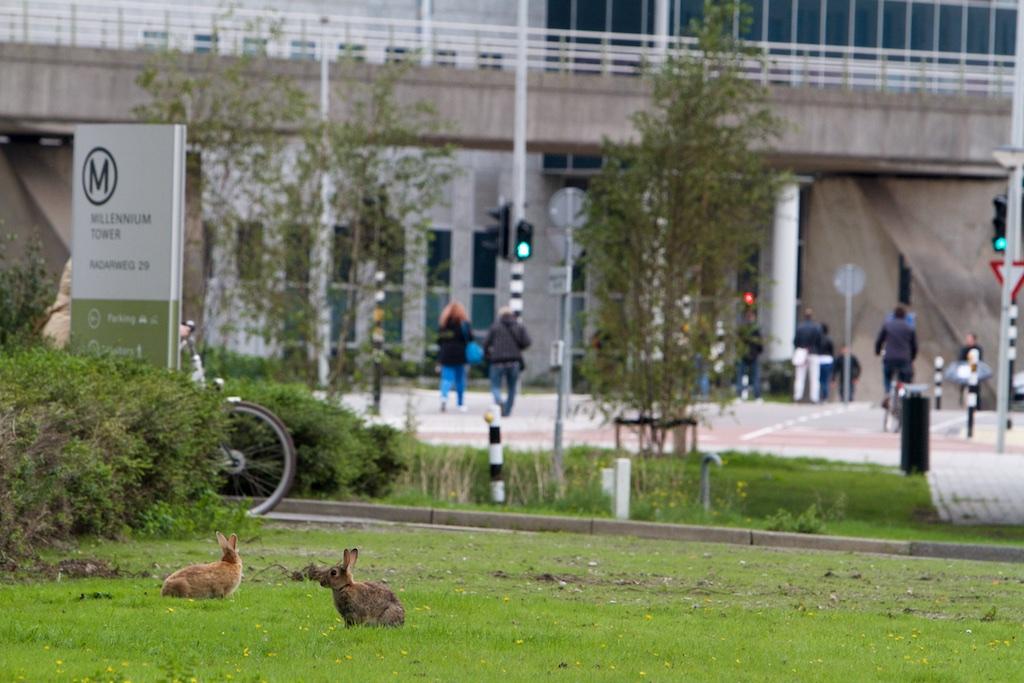 Een veilige plek voor konijnen zonder wandelaars met honden, weinig katten, alles dankzij het drukke verkeer