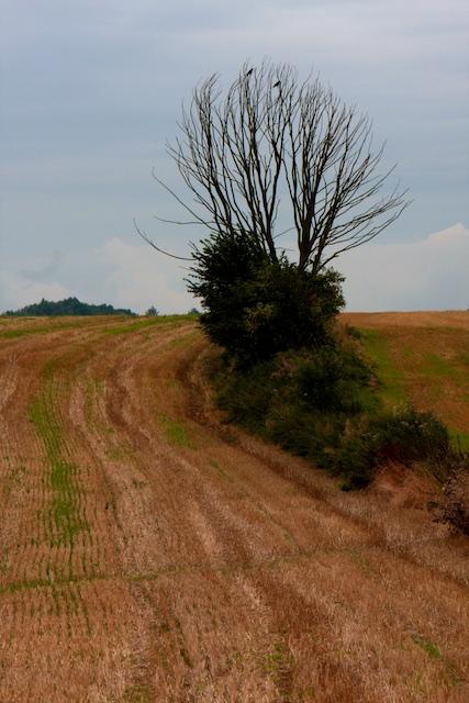 Stoppelveld bij Waterloo...Biobased Economy is gewoon landbouw-economie of gewas-verbranding maar dan met meer slap gelul
