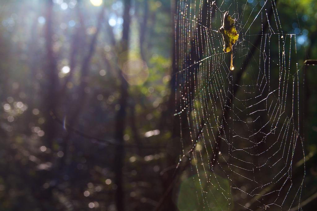 Zonder enige bemoeienis is de natuur vaak het meest interessant