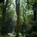 Geheel zonder onderhoud, het Friese boerwoud Wilhelminabos