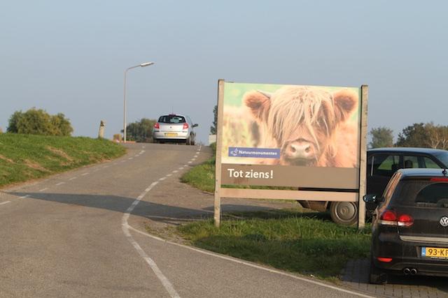 Oerrrr bij afscheid van Tiengemeten, Schots vee met verwaarloosde uitstraling verbeeldt de natuursmaak van Natuurmonumenten en geestverwanten