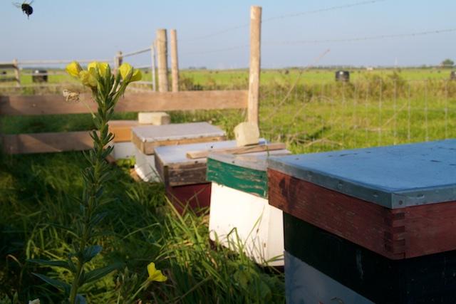 Bijenkasten bij bioboer op erf. Dit moet ook onder water van Natuurmonumenten/Oerr worden