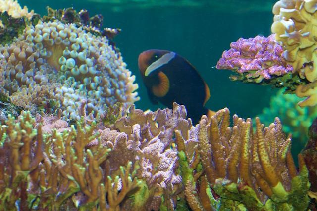 Nemo de papegaaivis papegaait bij ons geen onzin van milieuclubs