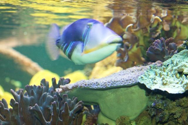 ...de echte oceaan laat andere resultaten zien dan niet-repliceerbare labexperimenten waar koraal aan een plotse pH-shock wordt blootgesteld