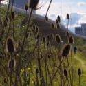 Wilde natuur Amsterdam Sloterdijk