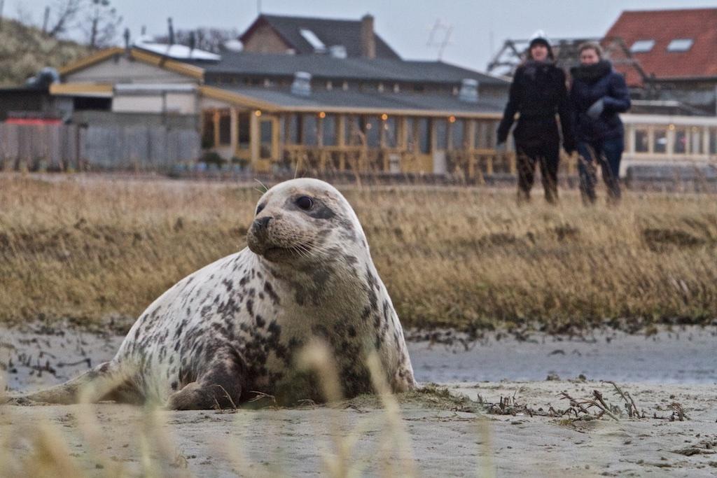 Onze mariene zoogdieren doen het juist erg goed, deze grijze zeehond bijvoorbeeld
